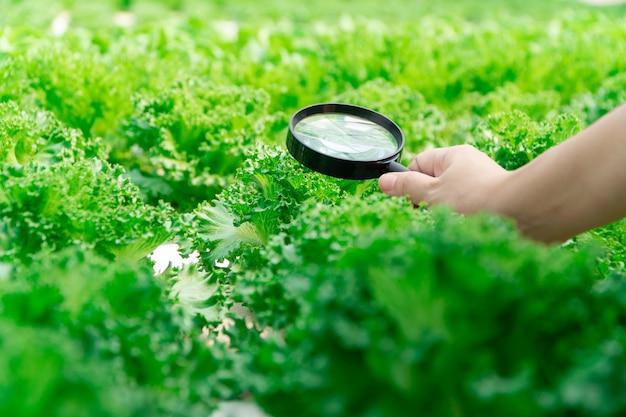 虫眼鏡を押しながら水耕栽培農場で野菜を見て農家の手のクローズアップ。