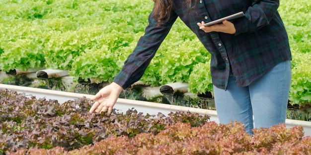 Азиатские женщины держат зеленый дуб на гидропонных овощных фермах и проверяют корень гринбо и качество