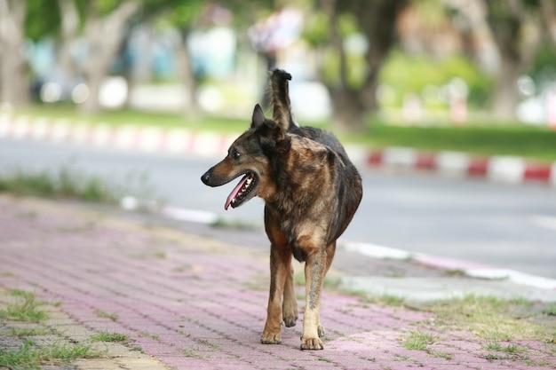 通りを歩いている犬
