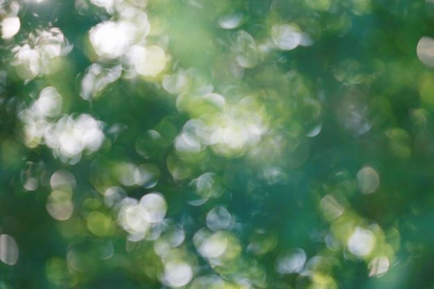 緑の木ボケライトテクスチャ背景、夏の光沢のある日光、ソフトぼかし