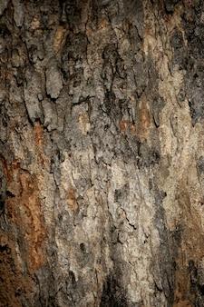 樹皮テクスチャ背景