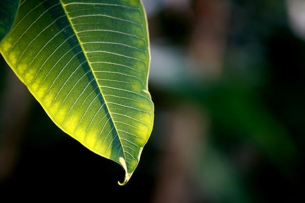 Листья тропических лесных деревьев текстура фон