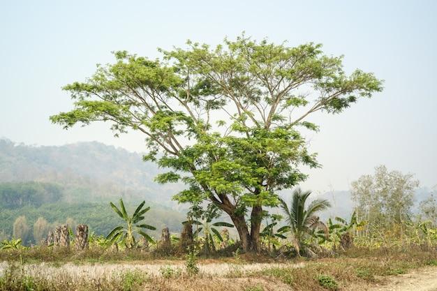 自然夏の季節の木