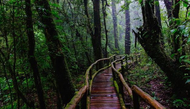 山の常緑の森の国民公園で歩道を歩く橋