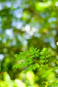葉の上の焦点を選択してください、