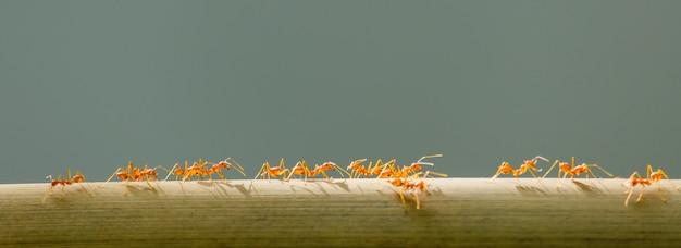 アリが枝に登る