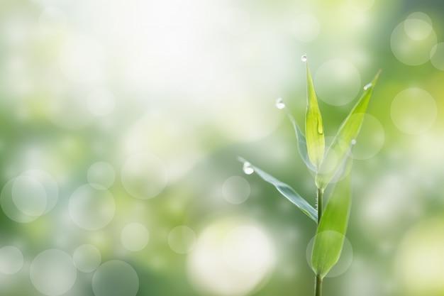 自然の竹の緑の色、葉の露、ボケの光の効果