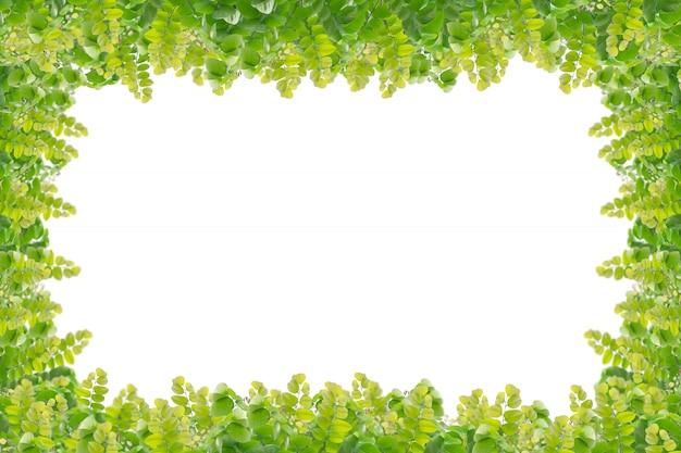 白い背景で隔離の緑の葉