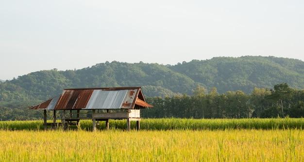 Коттедж на рисовых полях и копия пространства