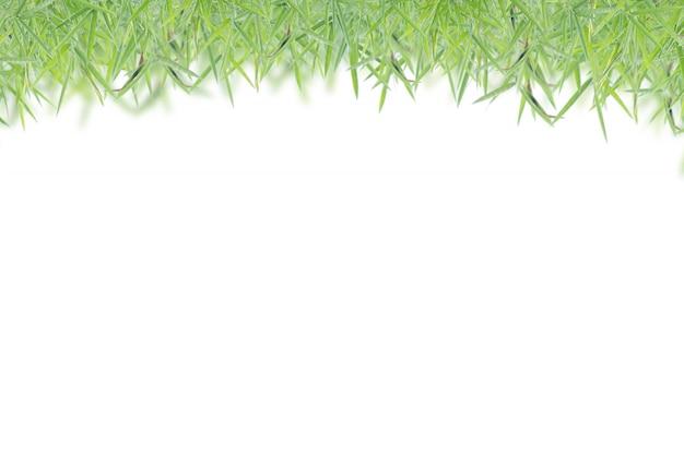 孤立した白い背景、葉、コピースペースで緑の葉