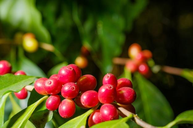 自然の中の豆コーヒーを閉じる
