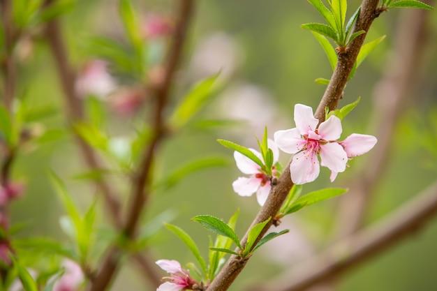 春調の白い花。