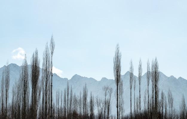 澄んだ青い空と影と木のフレームのヒマラヤ山脈