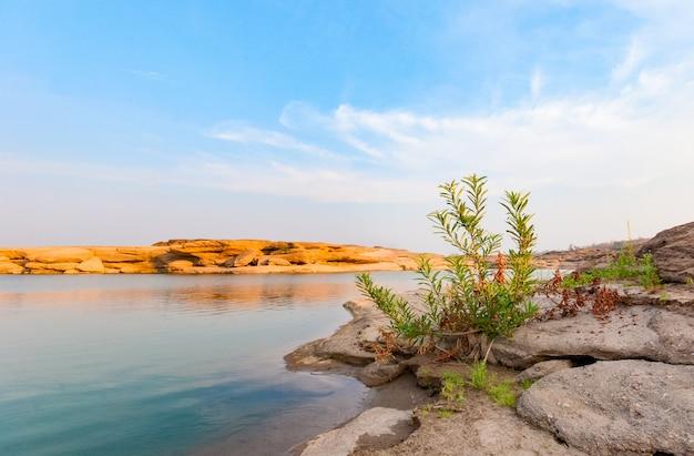 美しい緑の茂みはまだ日中青い空の下の乾燥した土地で育ちます