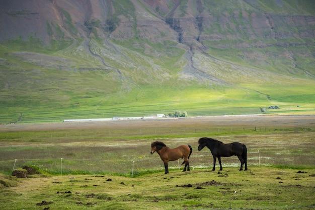 アイスランドの馬の牧草地の風光明媚なビュー