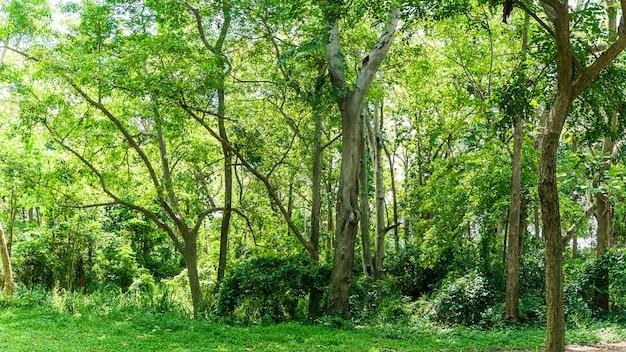 Пейзаж с зелеными цветами
