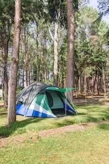 森でキャンプするドームテント