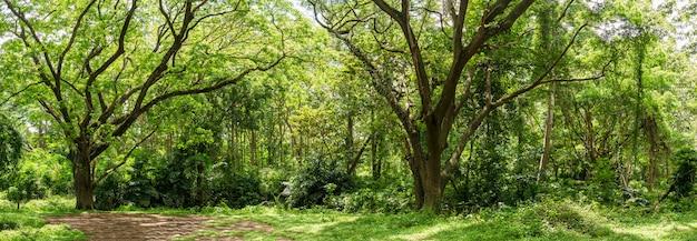 Панорамный тропический джунгли тропического леса в таиланде