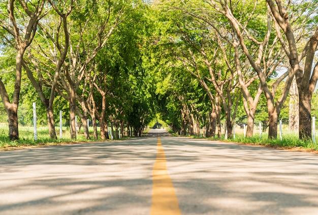 木のトンネルと道路アスファルト