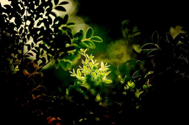 緑の葉の自然な背景の壁紙、葉の質感、テキスト用のスペースと葉
