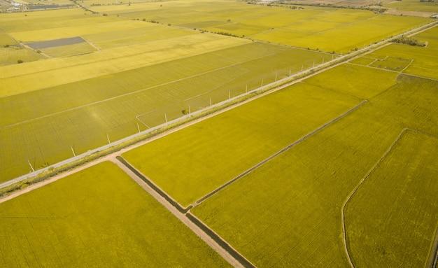 田んぼの風景の飛行ドローンから空撮
