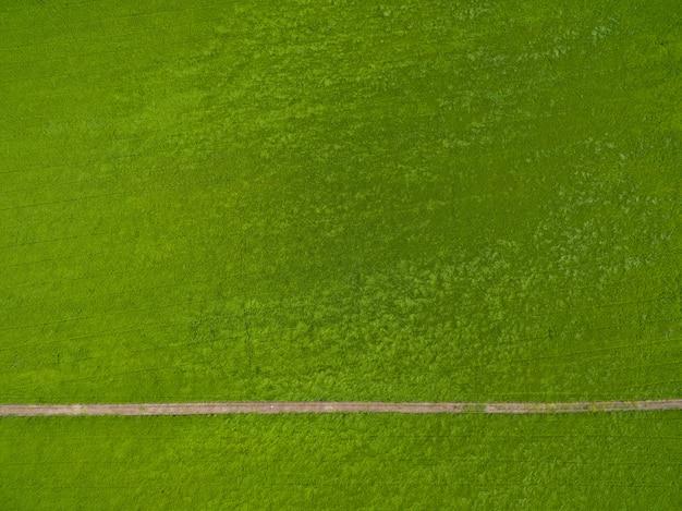 緑の風景と田んぼの飛行ドローンから空撮