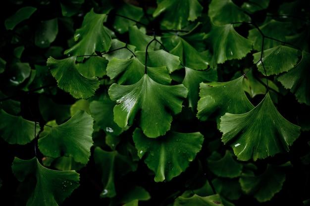 Зеленые листья естественный фон, текстура листа, листья