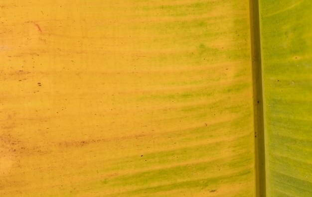 Банановый лист, зеленый лист, абстрактный фон,