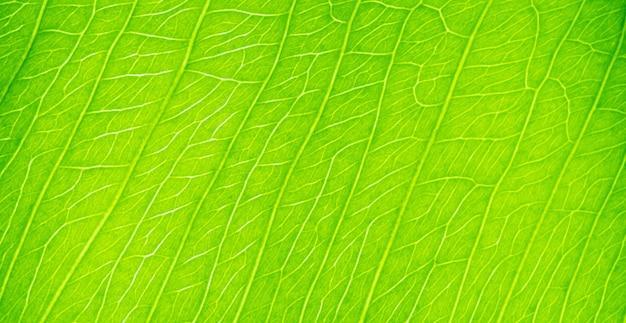 Зеленый лист текстуры крупным планом