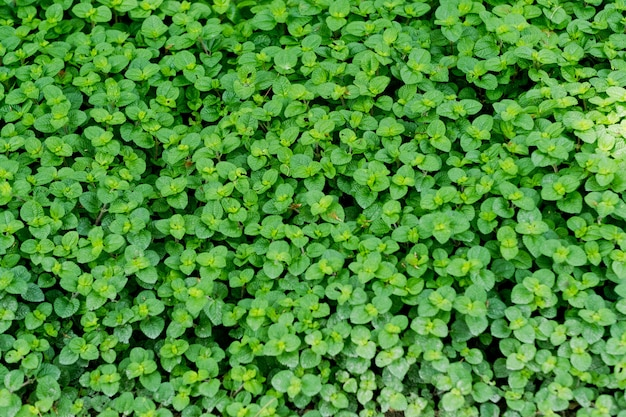 Зеленые листья стены