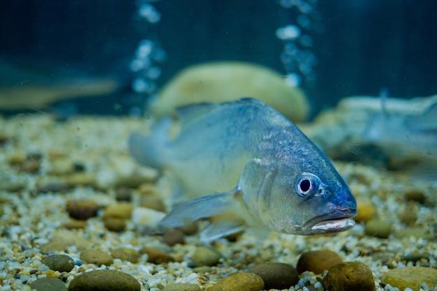 水族館での魚