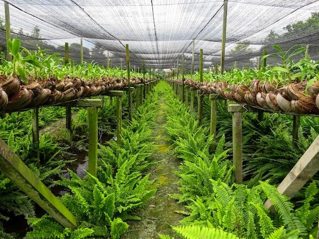 湿った地面に美しい緑色のシダを網羅したオーキッド農場列