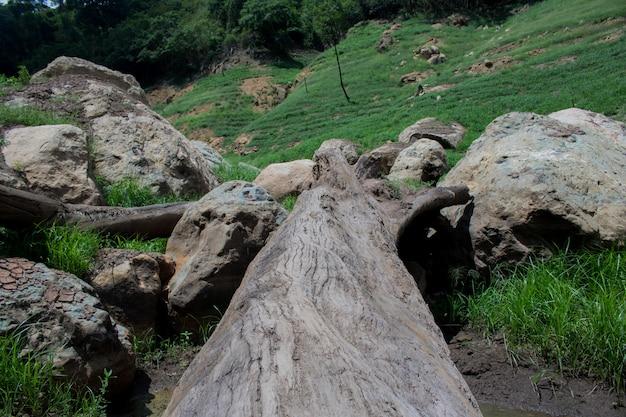 山の間の松の丸太で作られた自然の橋を閉じる