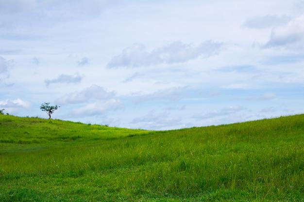 Поле зеленой травы и голубое небо.