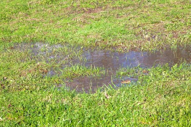 水たまりと芝生の眺め
