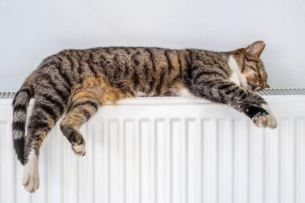 Полосатый кот лежит на теплом радиаторе у стены