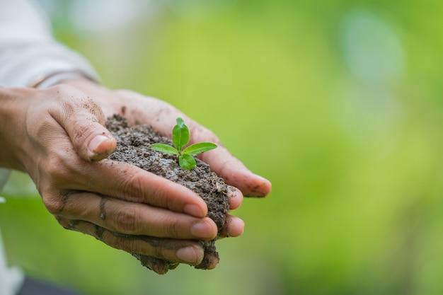 手は緑の若い植物と光を保持しています。