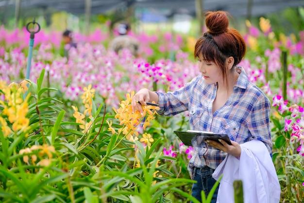 女性の蘭の研究者は庭の蘭の特性を調査し文書化しています