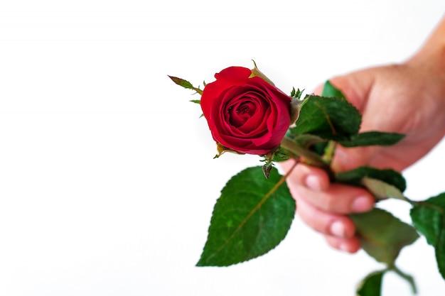 白地に赤いバラを持っている手