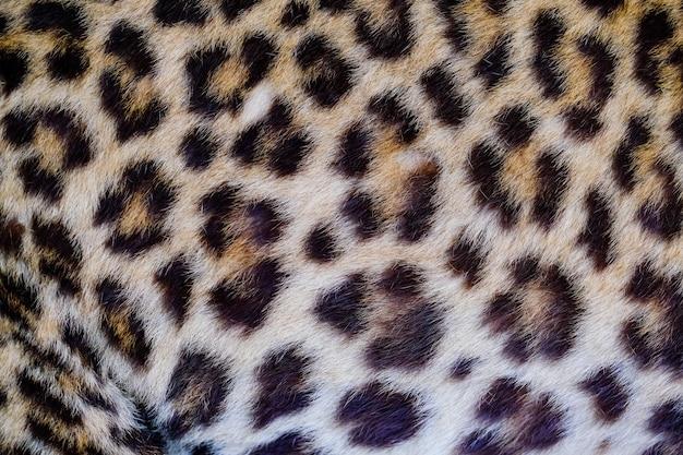 ヒョウとオセロットの肌の質感の背景
