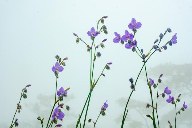 霧の中の紫色の花