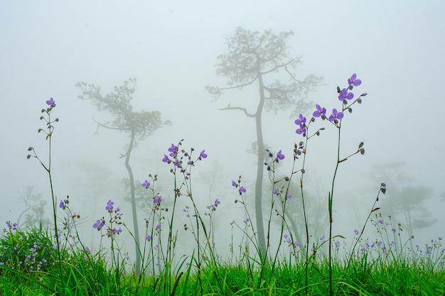 雨と夕焼けのナガ花の頂上、紫の花