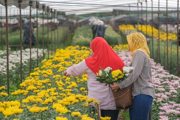 温室のイスラム教徒の女性労働者