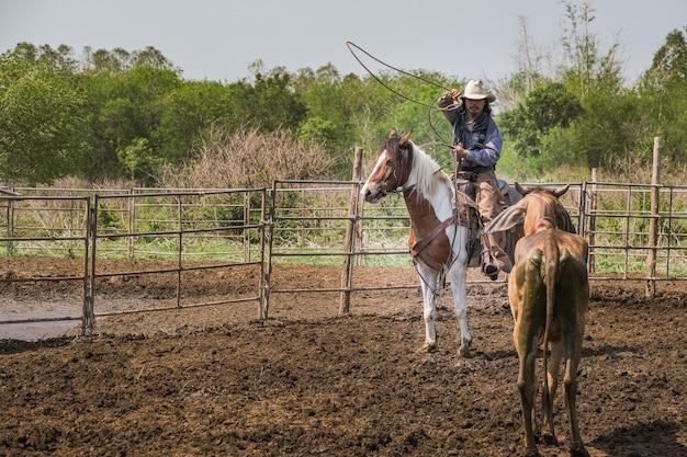 馬に乗ったカウボーイは牧場で牛を捕まえるためにロープを投げています