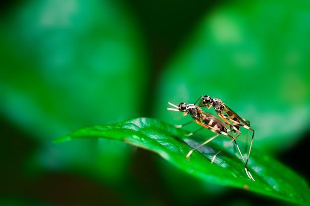 バグ昆虫の交配