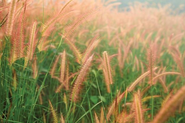朝の光の中で暖かい水の滴と草