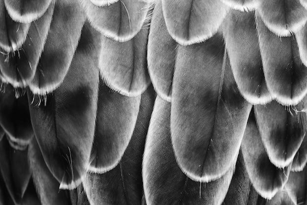 背景の羽のパターン