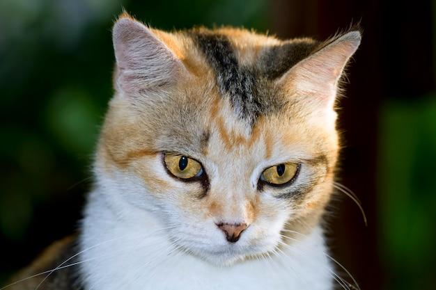 猫はかわいいとしたジェスチャーを探して