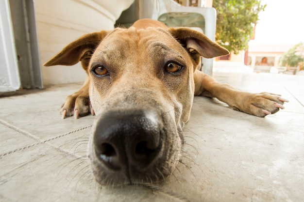 面白い犬の大きな鼻