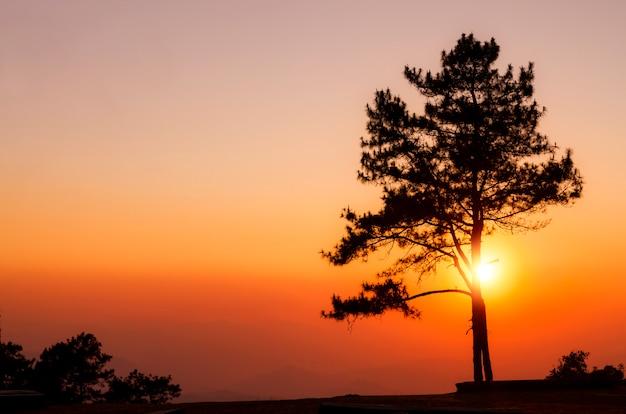夕日の山に松